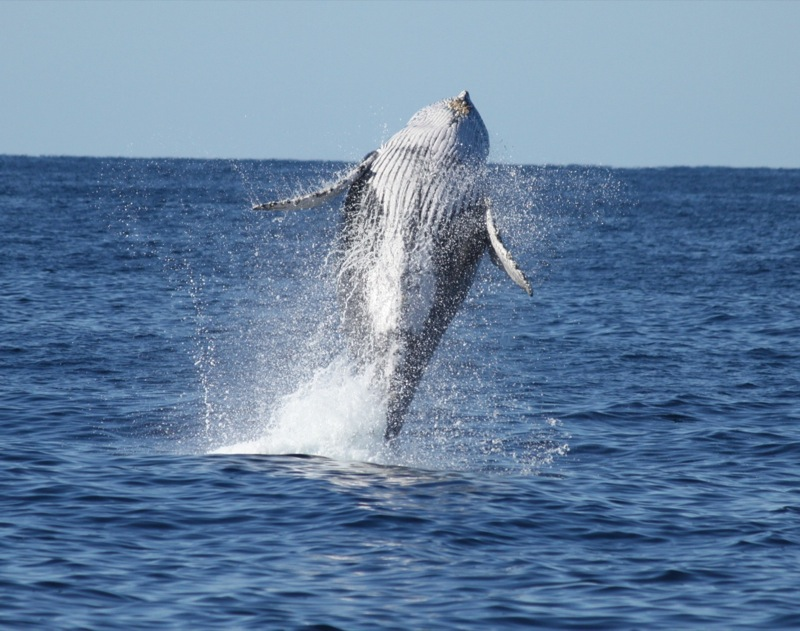 Whales of Samana tour - Ballenas de Samana excursion